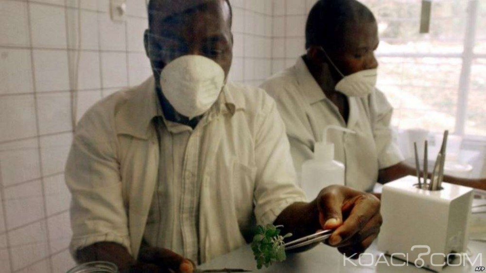 RDC: Deux responsables pharmaceutiques aux arrêts pour contrefaçon de la quinine