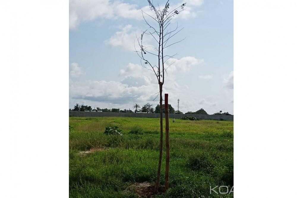 Côte d'Ivoire : Journée de la Paix, Ouattara exhorte ses compatriotes à planter un arbre car la forêt contribue à la Paix