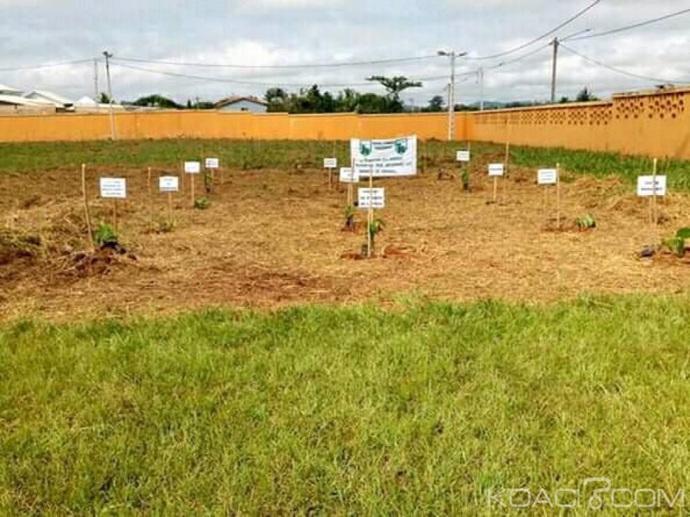 Côte d'Ivoire : Pour la célébration de la journée de la paix, le Président Bédié ouvre sa résidence privée de Daoukro pour le projet de plantation «un arbre pour la Paix»