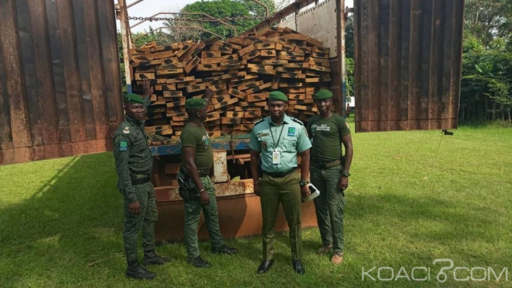 Côte d'Ivoire : Azaguié, des individus interpellés dans une forêt classée avec du bois sciés dans un véhicule de 10 tonnes