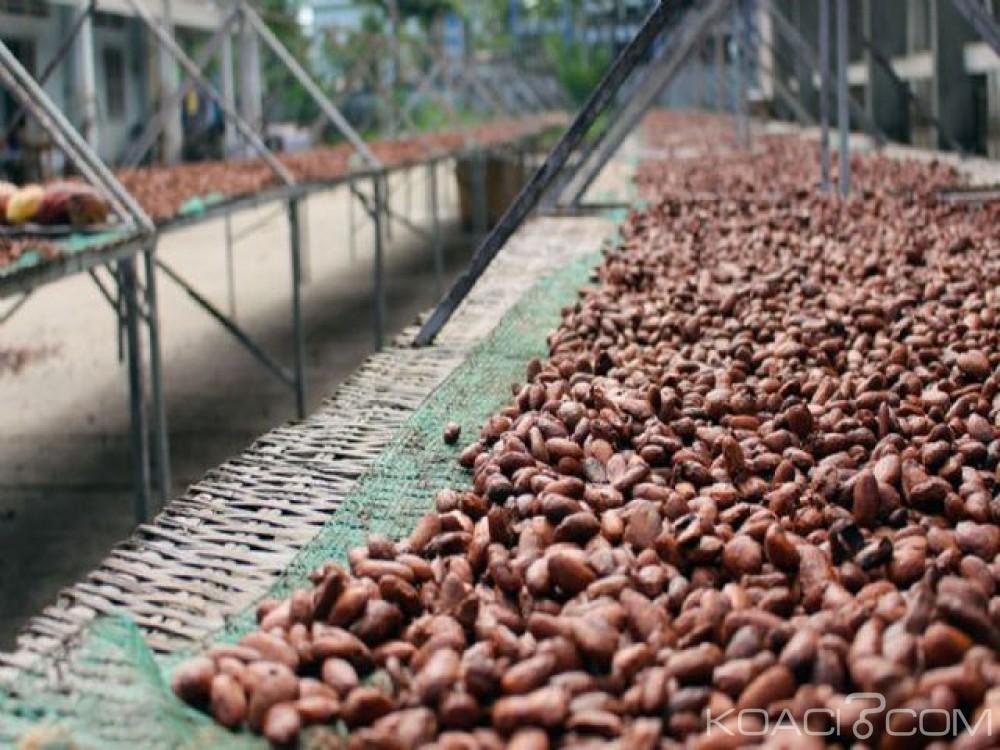 Côte d'Ivoire : 24 heures après la fixation du kilo de café à 700 FCFA, le Conseil café-cacao annonce le démarrage de la campagne le 24 décembre 2018