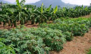 Cameroun:  Gouvernance foncière, le pays doté sous peu d'un observatoire foncier